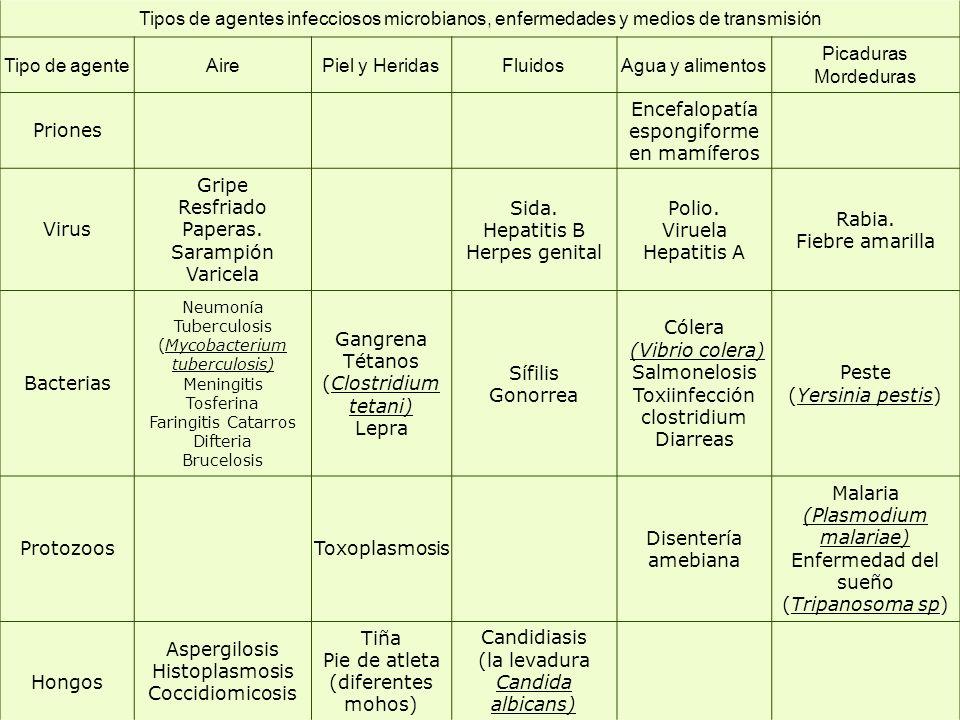 Encefalopatía espongiforme en mamíferos