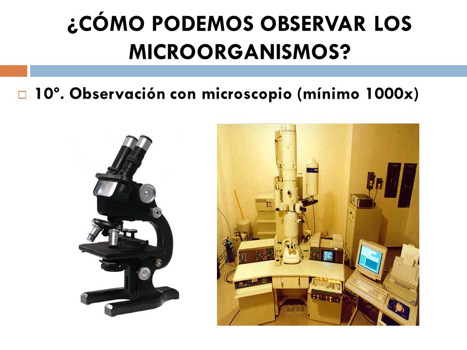 ¿CÓMO PODEMOS OBSERVAR LOS MICROORGANISMOS