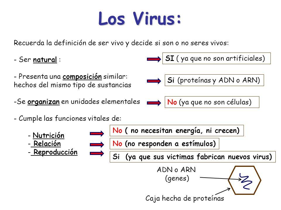 Los Virus:Recuerda la definición de ser vivo y decide si son o no seres vivos: Ser natural : Presenta una composición similar: