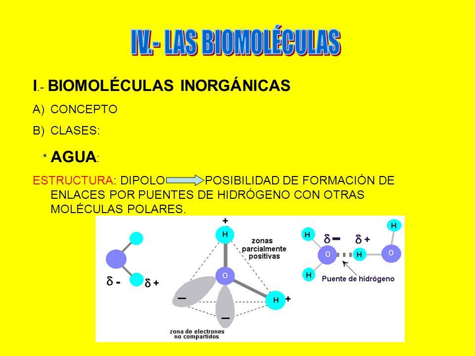 IV.- LAS BIOMOLÉCULAS I.- BIOMOLÉCULAS INORGÁNICAS CONCEPTO CLASES: