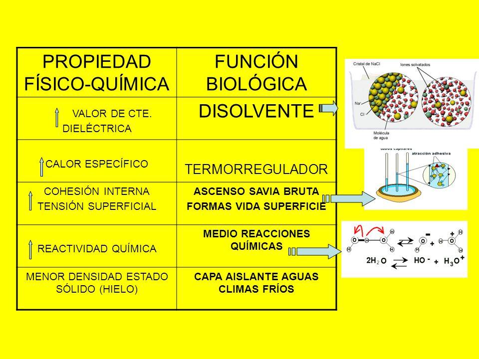 PROPIEDAD FÍSICO-QUÍMICA FUNCIÓN BIOLÓGICA VALOR DE CTE. DIELÉCTRICA