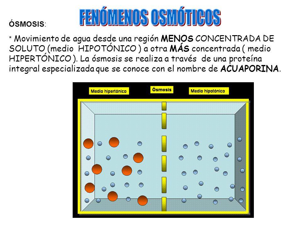 FENÓMENOS OSMÓTICOS ÓSMOSIS: