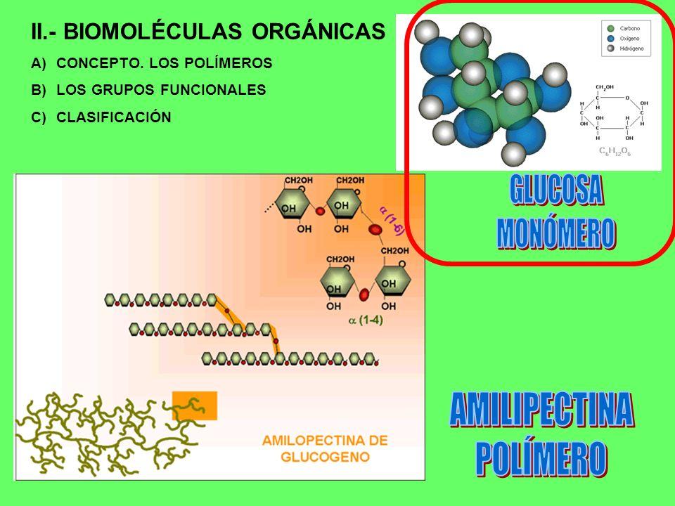 AMILIPECTINA POLÍMERO II.- BIOMOLÉCULAS ORGÁNICAS GLUCOSA MONÓMERO