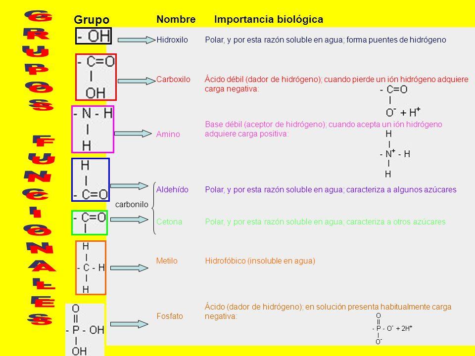GRUPOS FUNCIONALES Grupo Nombre Importancia biológica Hidroxilo