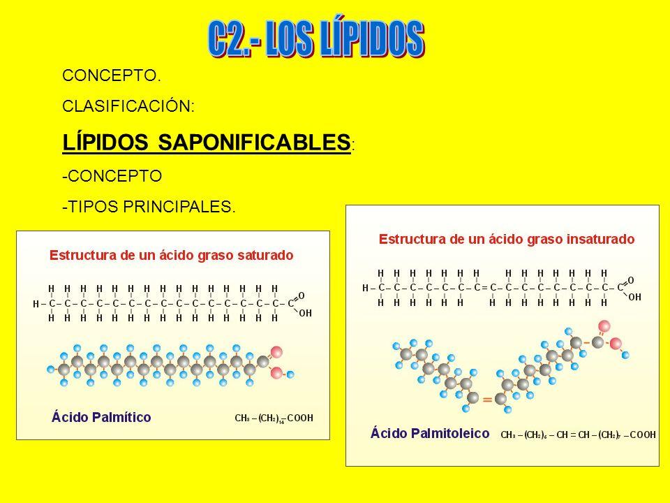 C2.- LOS LÍPIDOS LÍPIDOS SAPONIFICABLES: CONCEPTO. CLASIFICACIÓN: