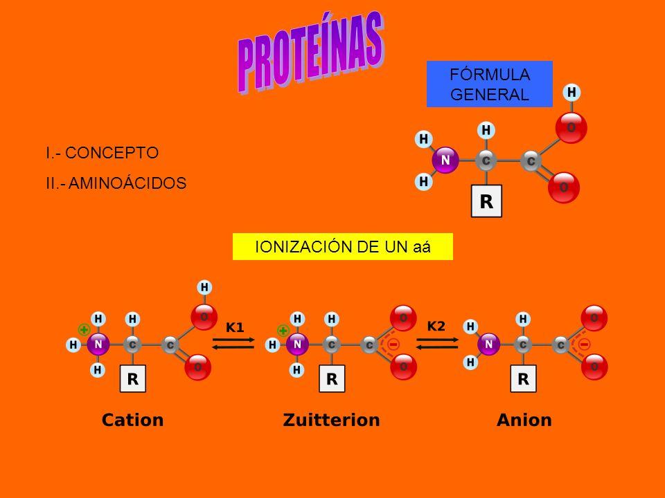 PROTEÍNAS FÓRMULA GENERAL I.- CONCEPTO II.- AMINOÁCIDOS
