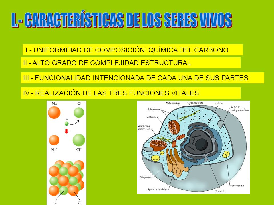 I.- CARACTERÍSTICAS DE LOS SERES VIVOS