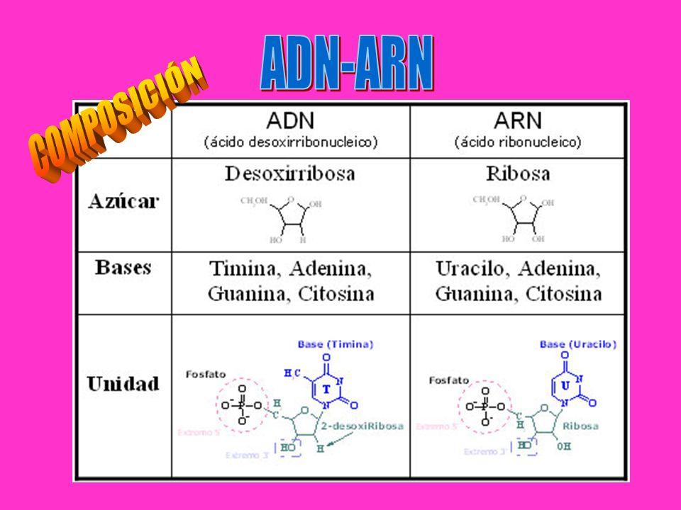 ADN-ARN COMPOSICIÓN