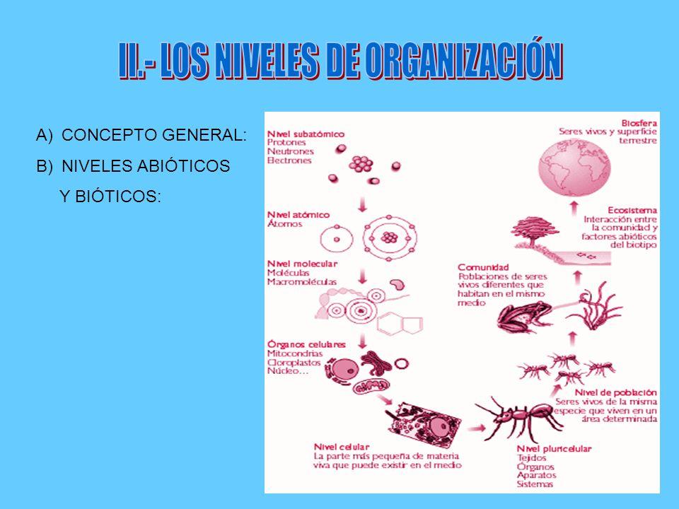 II.- LOS NIVELES DE ORGANIZACIÓN