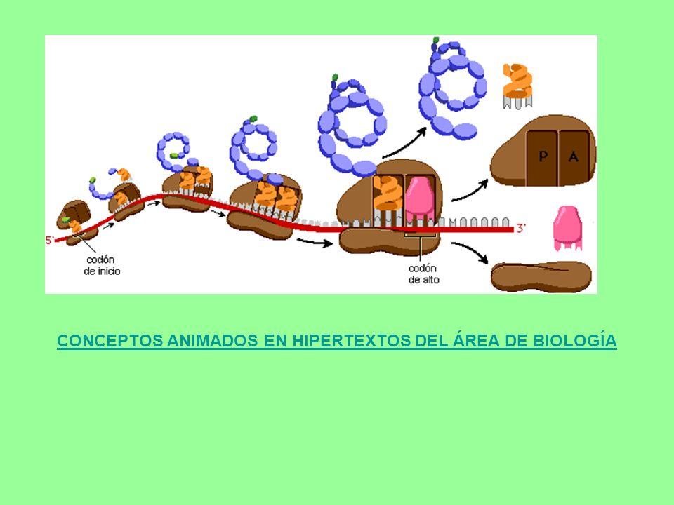 CONCEPTOS ANIMADOS EN HIPERTEXTOS DEL ÁREA DE BIOLOGÍA