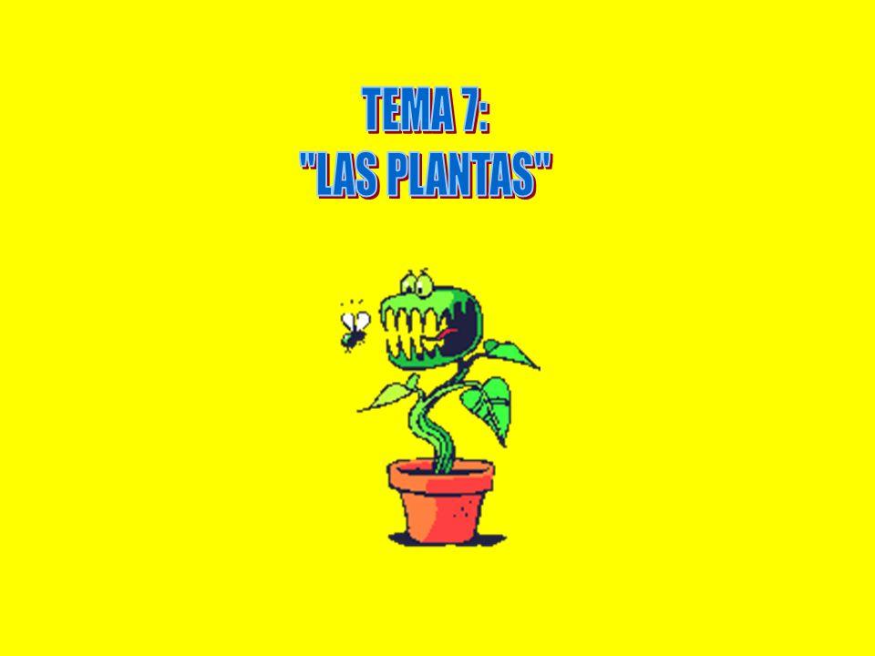 TEMA 7: LAS PLANTAS