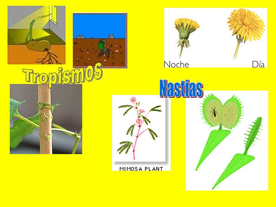 Tropismos Nastias