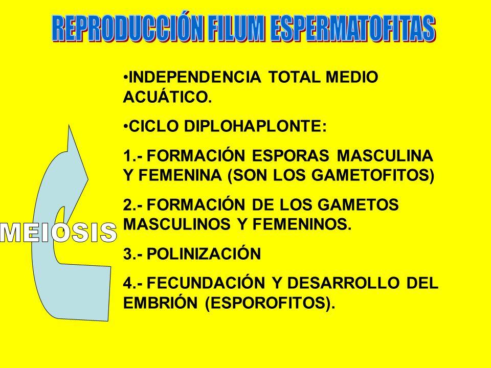 REPRODUCCIÓN FILUM ESPERMATOFITAS