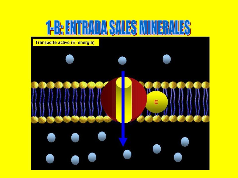 1-B: ENTRADA SALES MINERALES