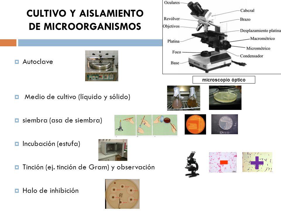 CULTIVO Y AISLAMIENTO DE MICROORGANISMOS