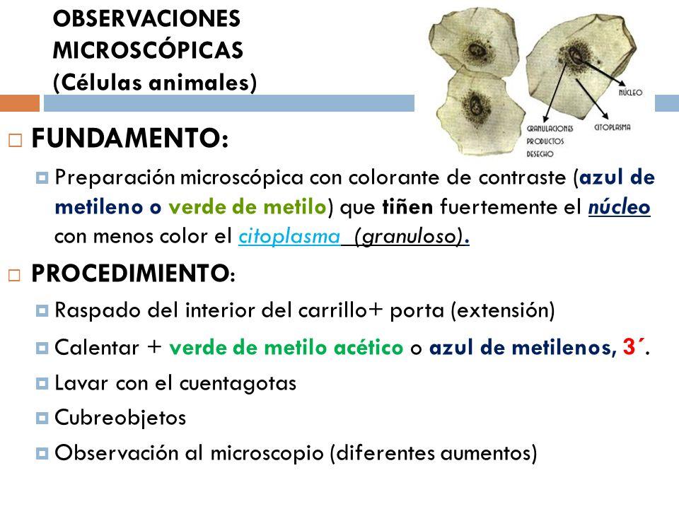 OBSERVACIONES MICROSCÓPICAS (Células animales)