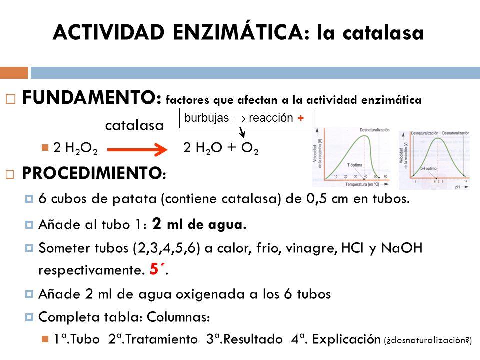 ACTIVIDAD ENZIMÁTICA: la catalasa
