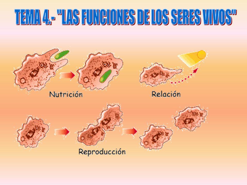 TEMA 4.- LAS FUNCIONES DE LOS SERES VIVOS