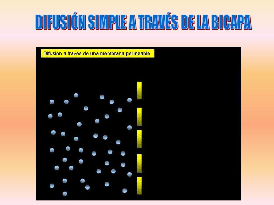 DIFUSIÓN SIMPLE A TRAVÉS DE LA BICAPA