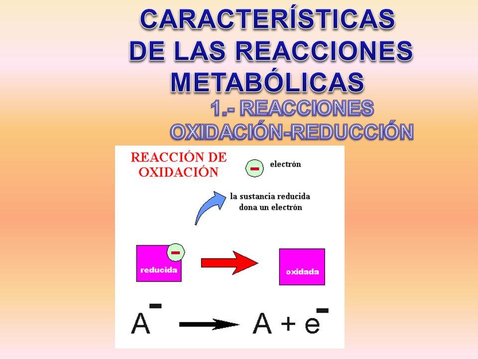 DE LAS REACCIONES METABÓLICAS 1.- REACCIONES OXIDACIÓN-REDUCCIÓN