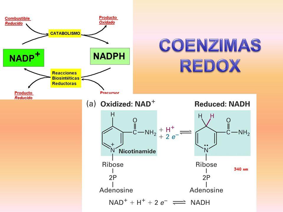 COENZIMAS REDOX