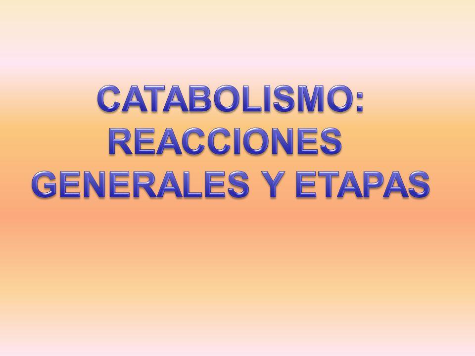 CATABOLISMO: REACCIONES GENERALES Y ETAPAS