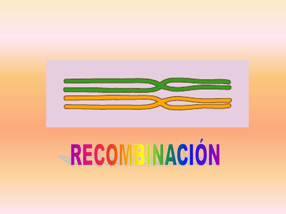 RECOMBINACIÓN