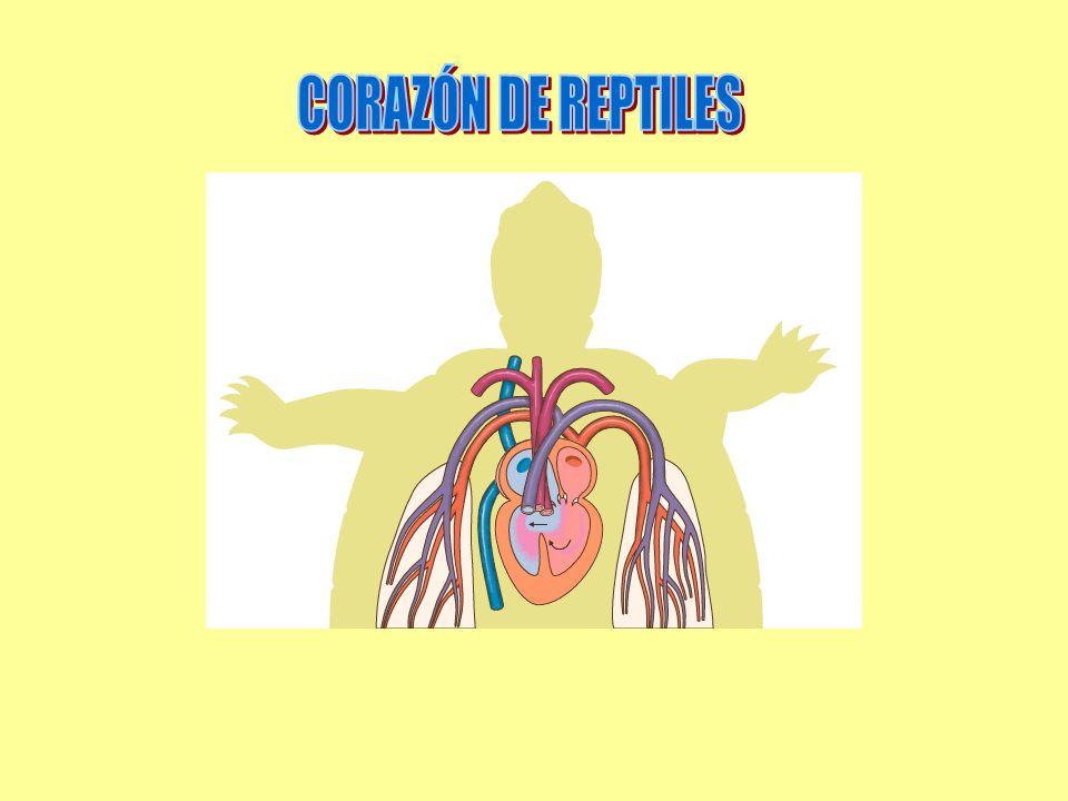 CORAZÓN DE REPTILES