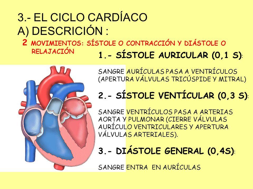 3.- EL CICLO CARDÍACO DESCRICIÓN :