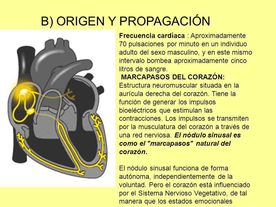 B) ORIGEN Y PROPAGACIÓN