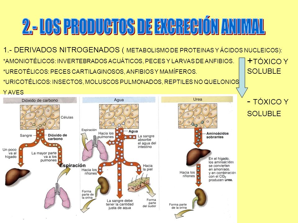 2.- LOS PRODUCTOS DE EXCRECIÓN ANIMAL