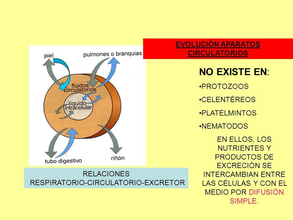 EVOLUCIÓN APARATOS CIRCULATORIOS