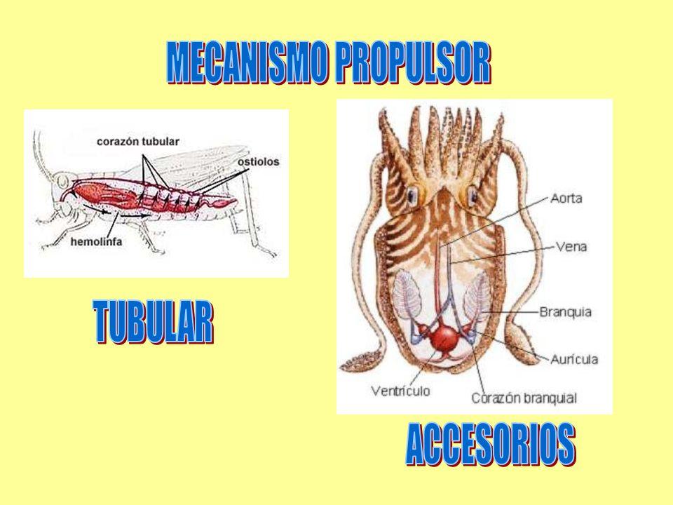 MECANISMO PROPULSOR TUBULAR ACCESORIOS
