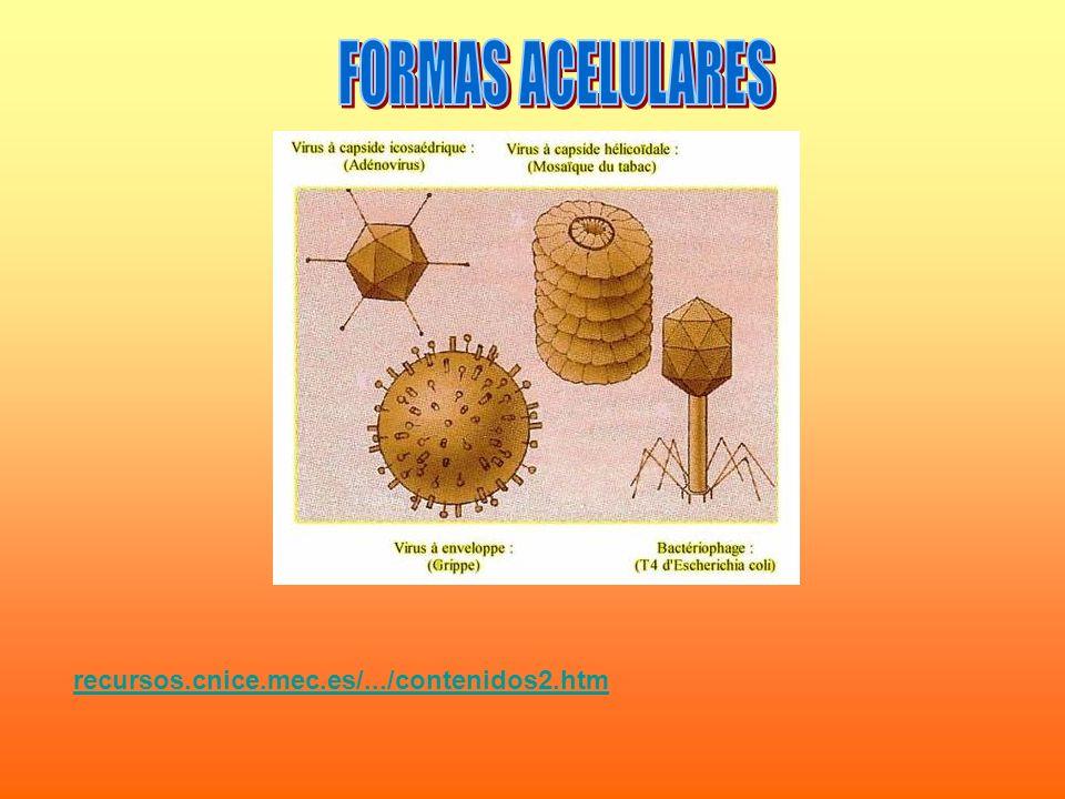 FORMAS ACELULARES recursos.cnice.mec.es/.../contenidos2.htm