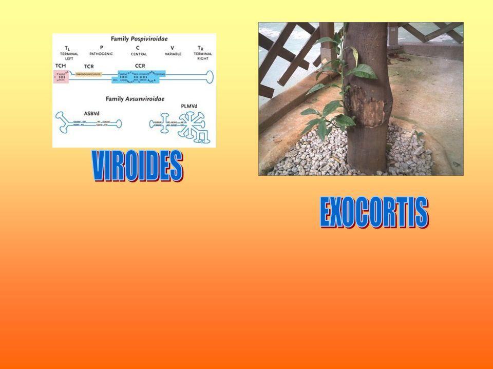 VIROIDES EXOCORTIS