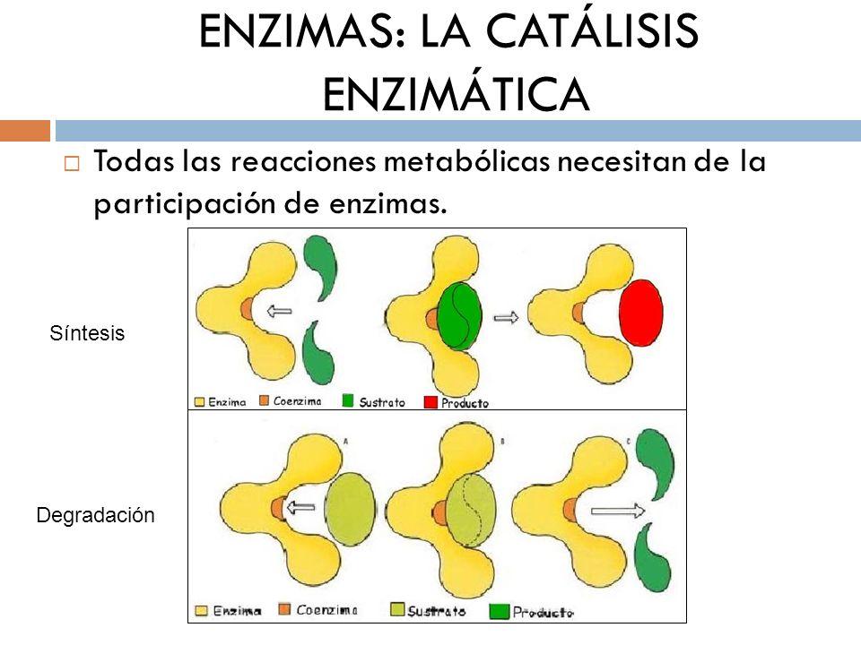 ENZIMAS: LA CATÁLISIS ENZIMÁTICA