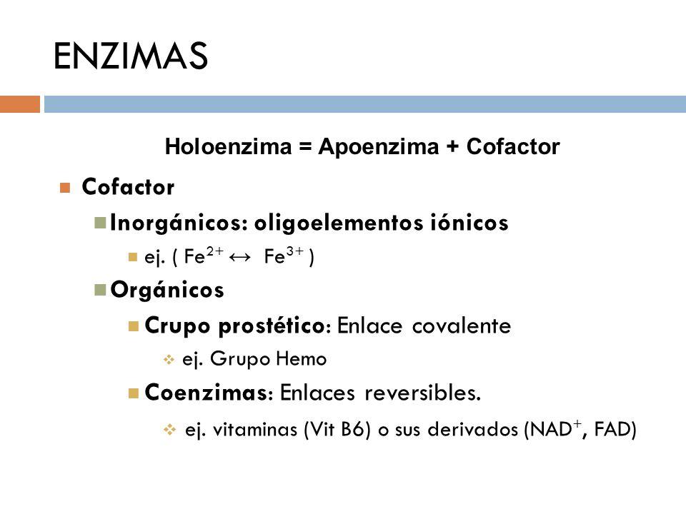 Holoenzima = Apoenzima + Cofactor