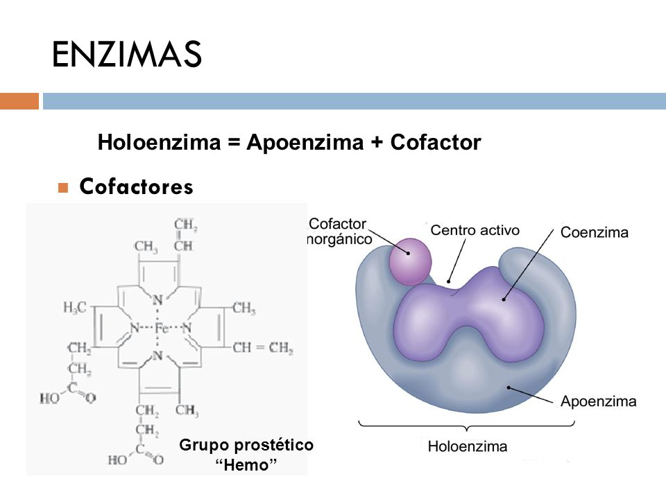 ENZIMAS Holoenzima = Apoenzima + Cofactor Cofactores Grupo prostético
