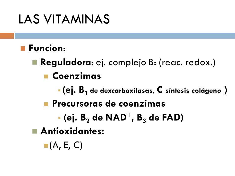 LAS VITAMINAS Funcion: Reguladora: ej. complejo B: (reac. redox.)