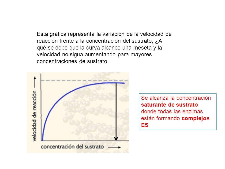 Esta gráfica representa la variación de la velocidad de reacción frente a la concentración del sustrato; ¿A