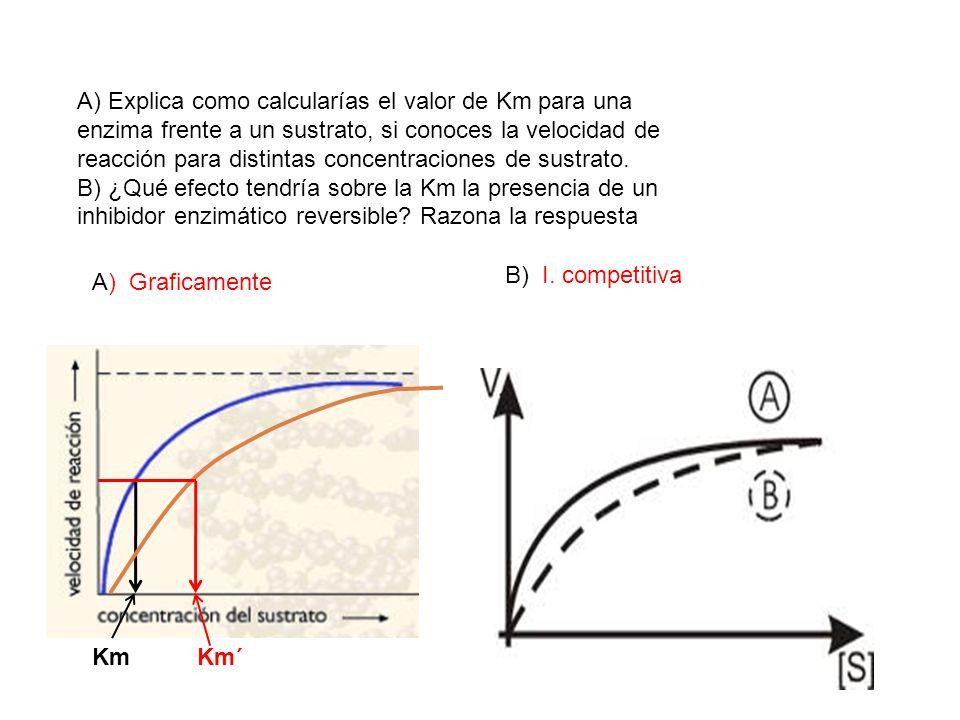 A) Explica como calcularías el valor de Km para una enzima frente a un sustrato, si conoces la velocidad de reacción para distintas concentraciones de sustrato.