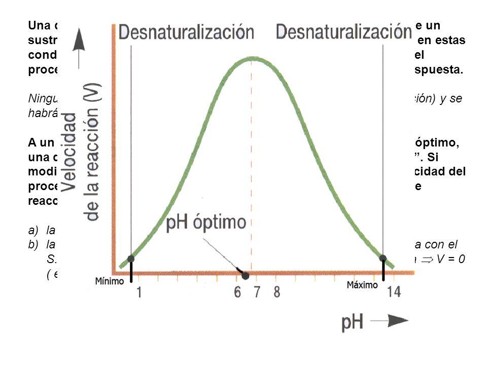 Una determinada concentración de enzima cataliza la conversión de un sustrato S en un producto P a una velocidad máxima de 3 µ M/min, en estas condiciones de ensayo ¿qué incremento de valor tendrá la Vmax del proceso si duplicamos la concentración del sustrato Razona la respuesta.