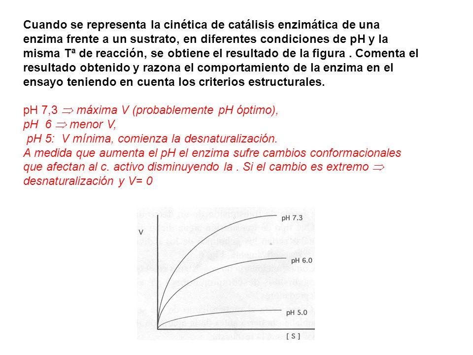 Cuando se representa la cinética de catálisis enzimática de una enzima frente a un sustrato, en diferentes condiciones de pH y la misma Tª de reacción, se obtiene el resultado de la figura . Comenta el resultado obtenido y razona el comportamiento de la enzima en el ensayo teniendo en cuenta los criterios estructurales.