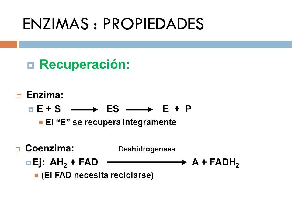 ENZIMAS : PROPIEDADES Recuperación: Enzima: E + S ES E + P