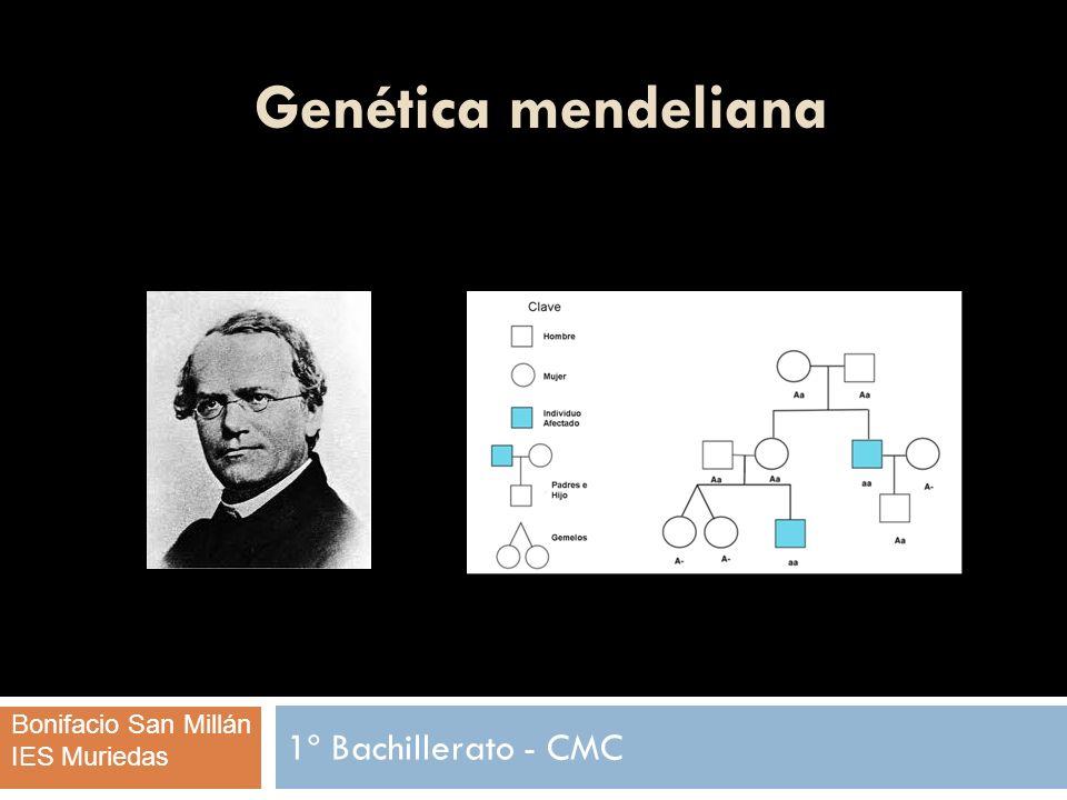 Genética mendeliana 1º Bachillerato - CMC Bonifacio San Millán