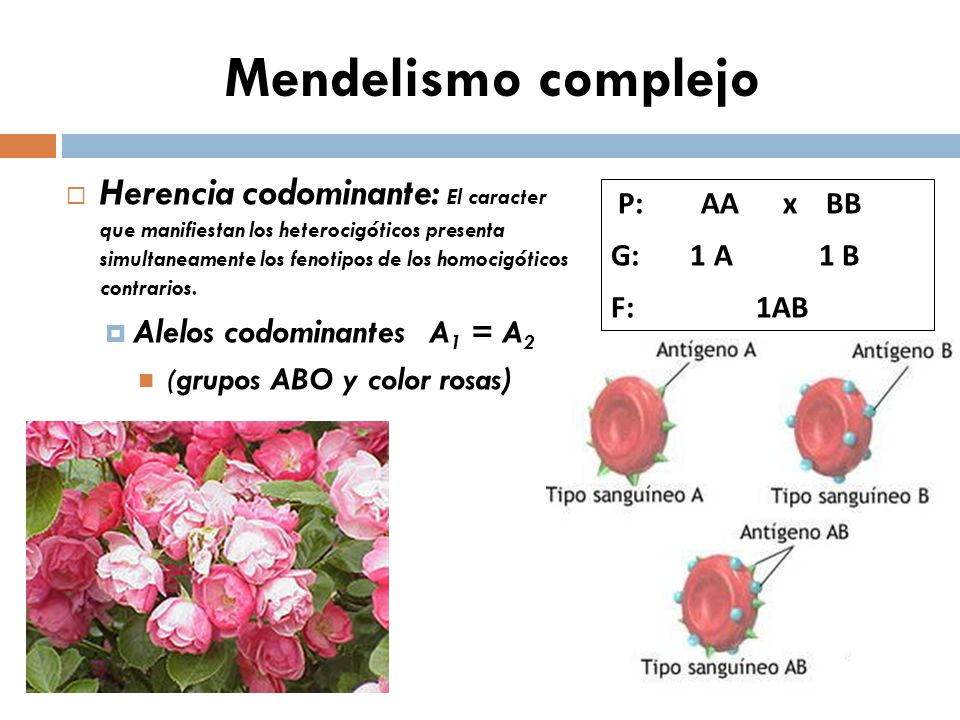 Mendelismo complejo