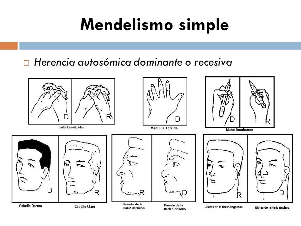 Mendelismo simple Herencia autosómica dominante o recesiva D R D R D D