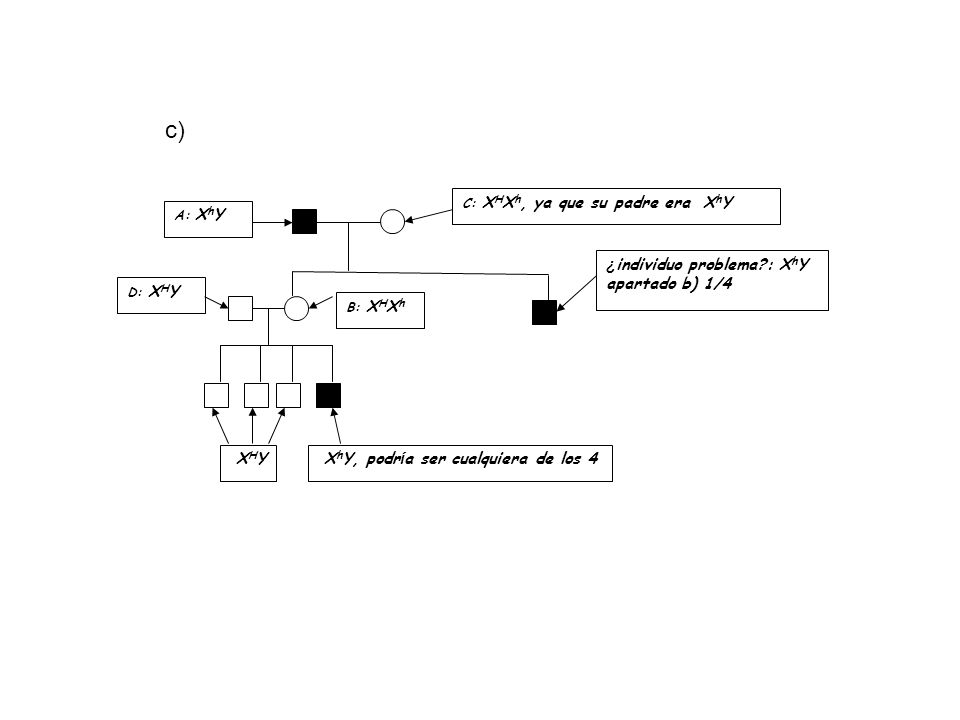 c) ¿individuo problema : XhY apartado b) 1/4