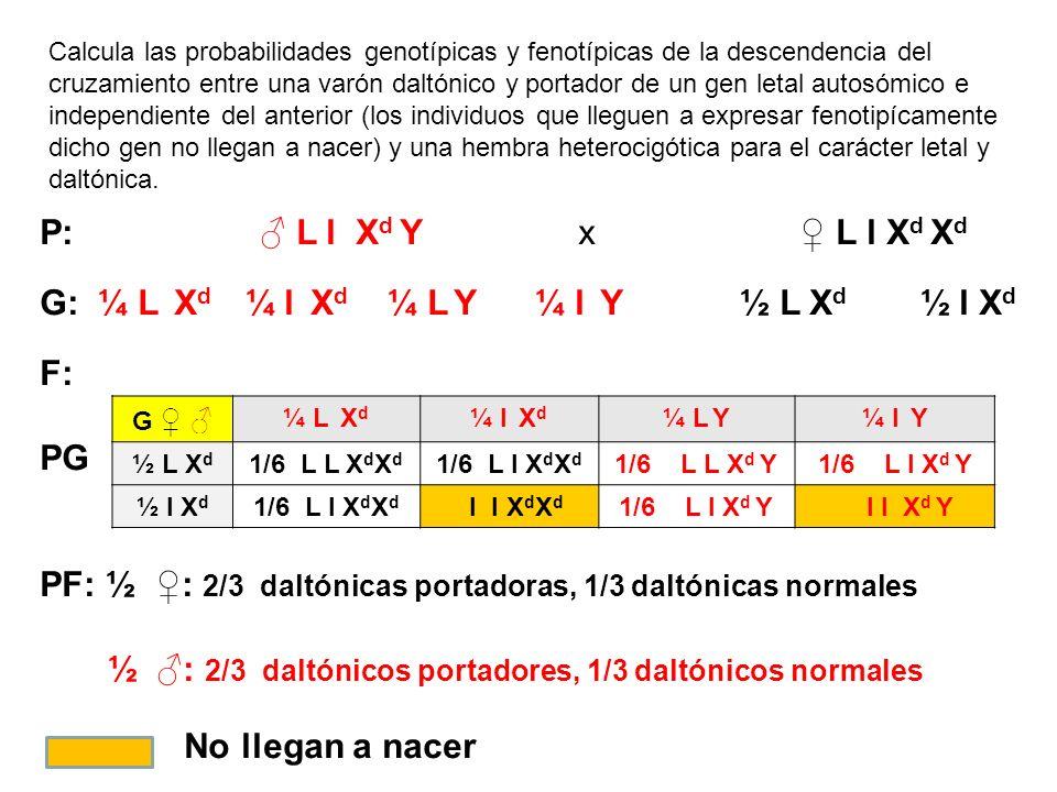 G: ¼ L Xd ¼ l Xd ¼ L Y ¼ l Y ½ L Xd ½ l Xd F: PG