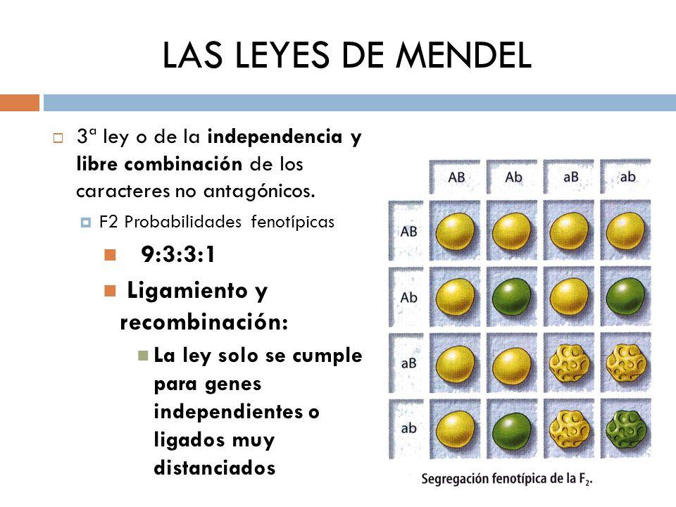 LAS LEYES DE MENDEL 9:3:3:1 Ligamiento y recombinación: